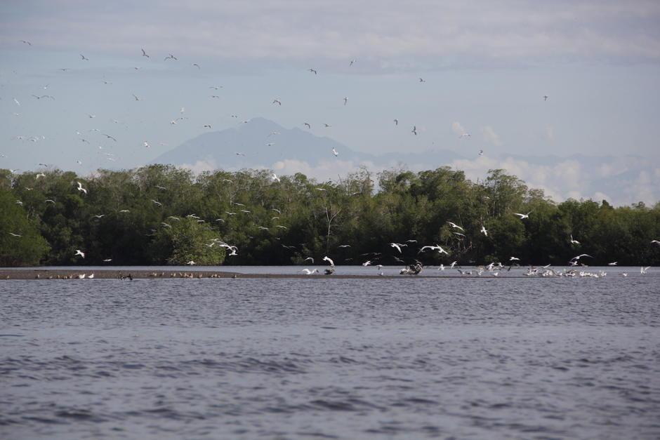 El Estero permite observar la flora y fauna que convergen en este humedal. (Foto: Fredy Hernández/Soy502)