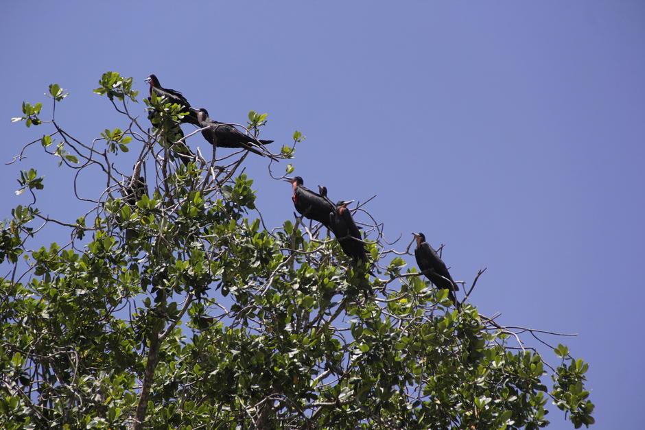 Otras aves descansan en los árboles antes de continuar con su camino. (Foto: Fredy Hernández/Soy502)