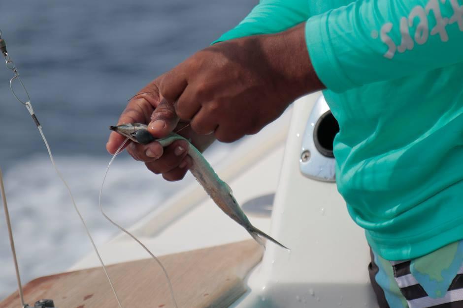 Para el torneo se utilizaron anzuelos biodegradables para cuidar a los peces. (Foto: Alejandro Balán/Soy502)