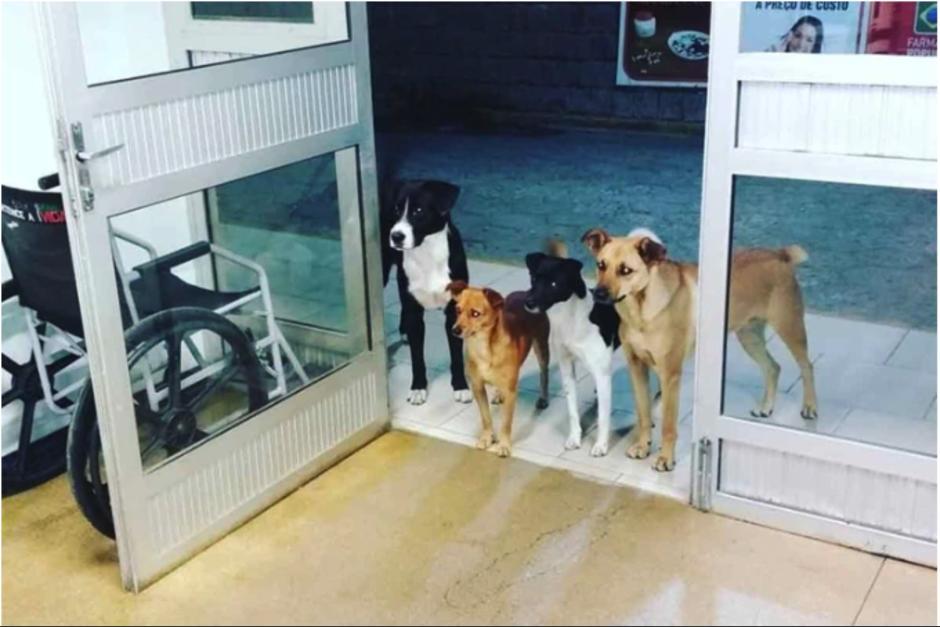 Cuatro perros esperaron a las puertas de hospital a su dueño