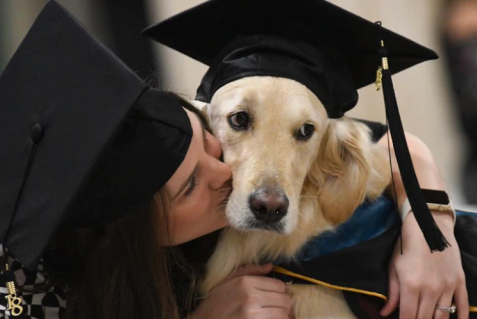 Golden Retriever recibe diploma en universidad de Nueva York