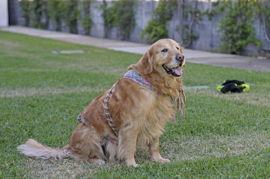 Cuida a tus mascotas del ruido de esta noche. (Fotos: Erivan Campos/Soy502)
