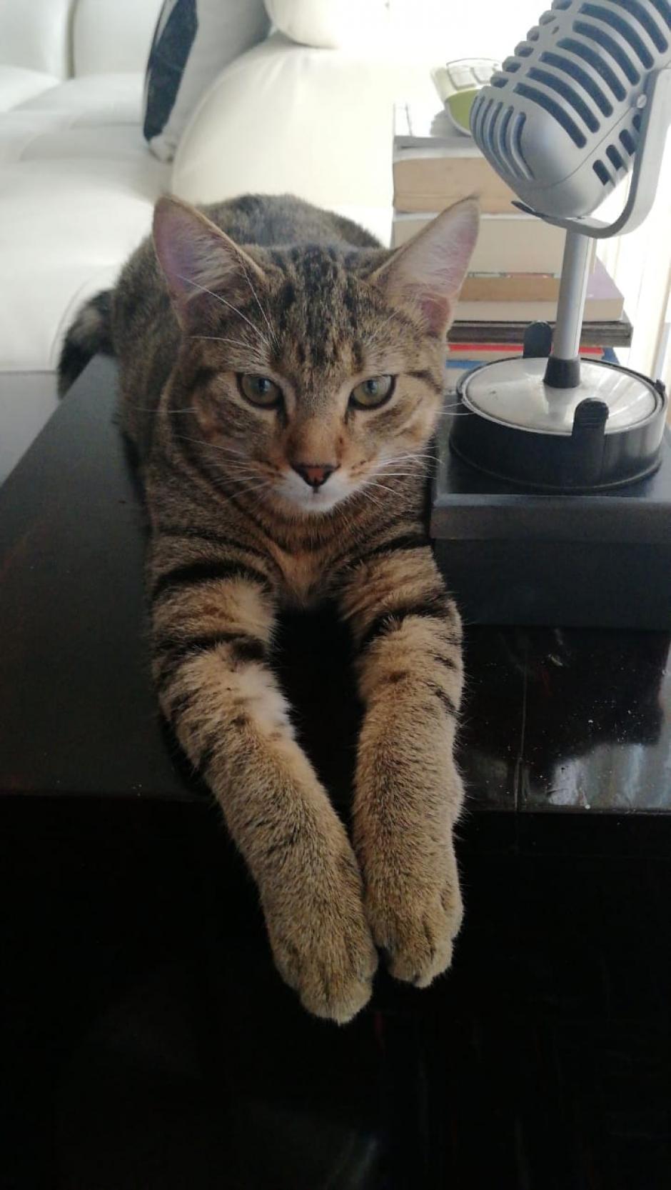 Teo es un gato de siete meses y son sus primeras navidades. (Fotos: Erivan Campos/Soy502)