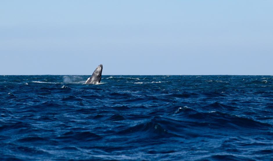 La observación de cetáceos es una actividad que atrae a muchos visitantes. (Foto: Paola Foncea/PNUD)