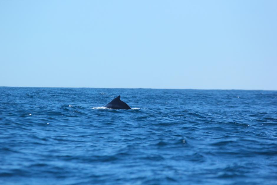 Hay que mantener la calma y el silencio para no estresar a las ballenas. (Foto: Paola Foncea/PNUD)