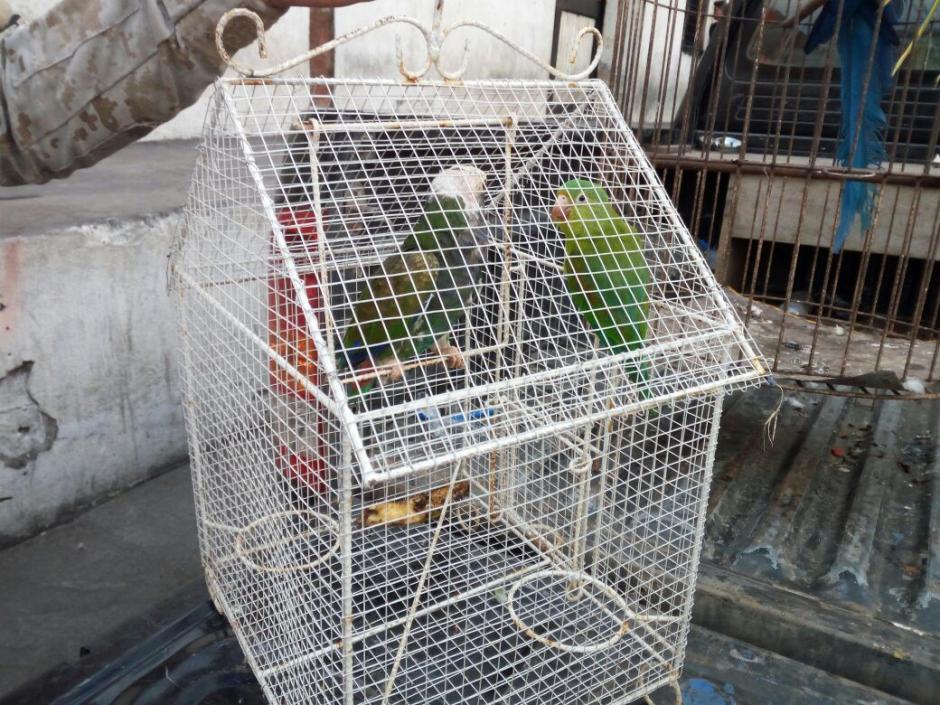 Las autoridades rescataron varias aves en peligro de extinción. (Foto: PNC)