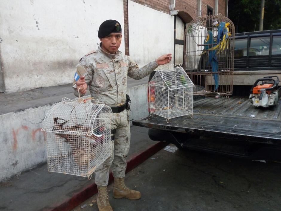 Las aves fueron trasladadas hacia el Conap, según indicó la PNC. (Foto: PNC)