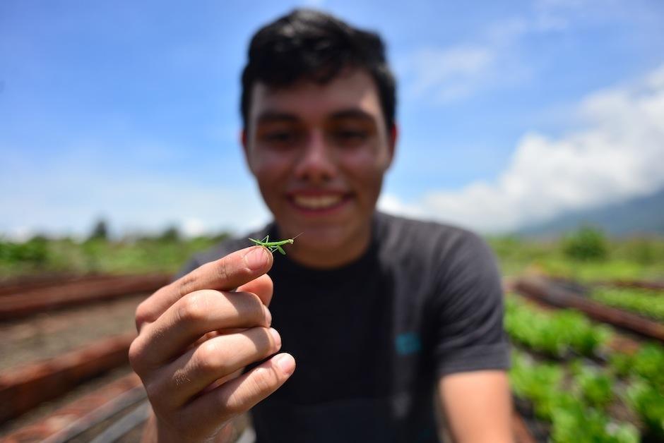 Lso jóvenes usan prácticas amigables con el medio ambiente. (Foto: Jesús Alfonso/Soy502)