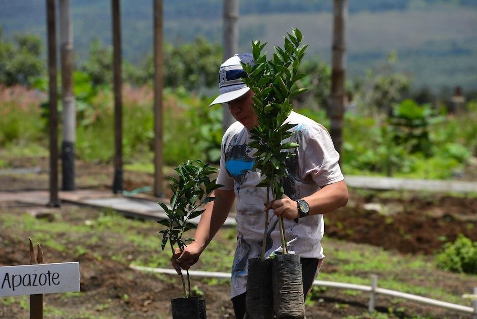 También habrá un área de árboles para reforestar. (Foto: Jesús Alfonso/Soy502)