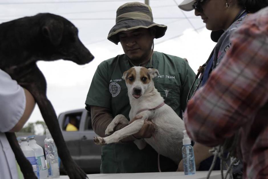 El resto de animales que quedó sin familia es evacuado de la zona cero. (Foto: Alejandro Balán/Soy502)
