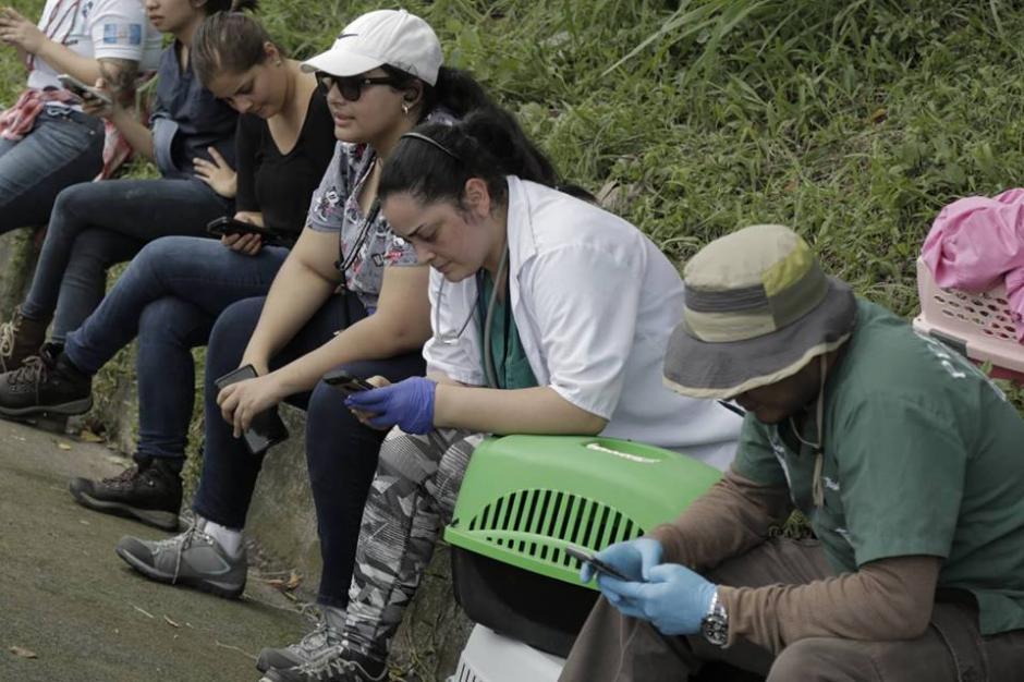 Los especialistas están trabajando para atender a los animales. (Foto: Alejandro Balán/Soy502)