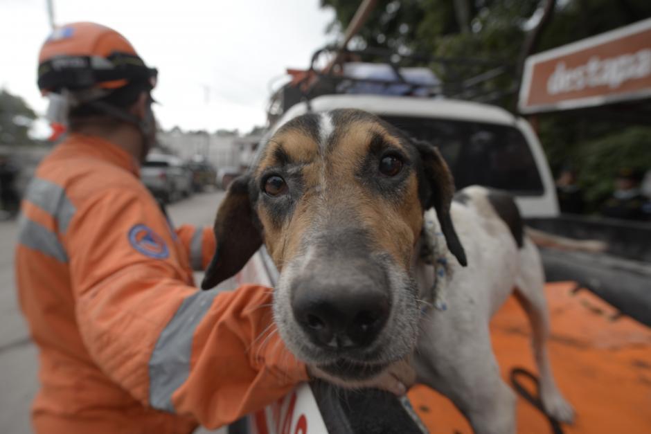 Lunes: lo encontraron junto a sus dueños ya muertos. El perro se resistía a dejarlos, no quería salir. (Fotos: Wilder López/Soy502)