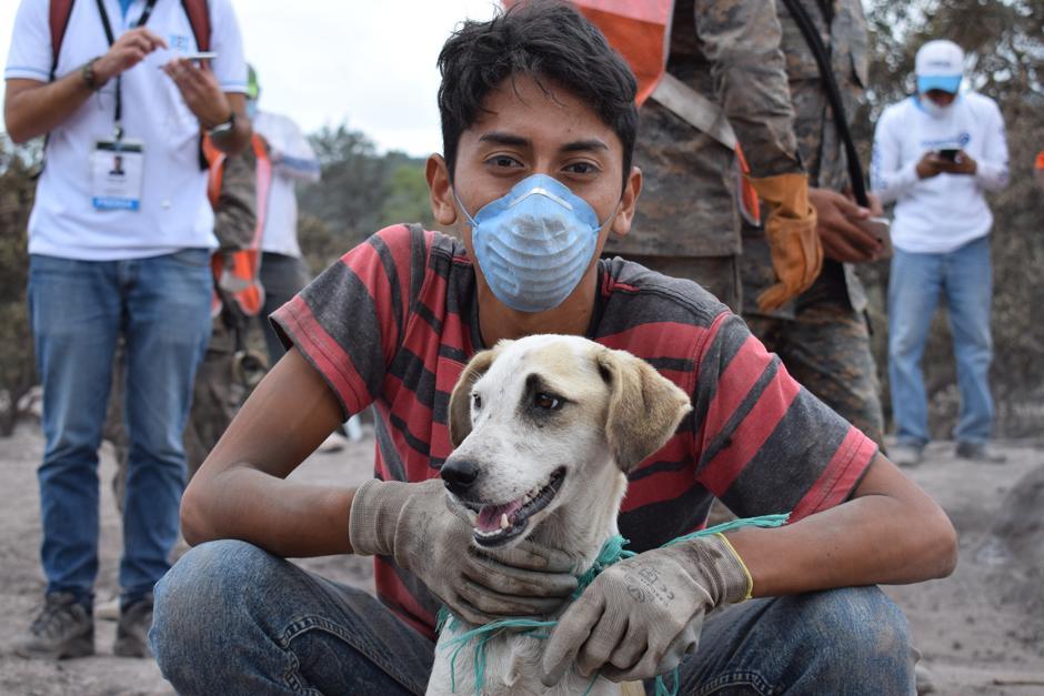 Miércoles: Durante la semana se rescataron centenares de animales con vida. (María José Lara/Soy502)