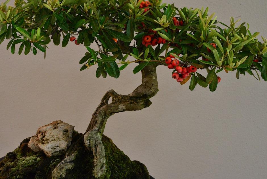Los árboles también florean y dan fruto. (Foto: Jesús Alfonso/Soy502)