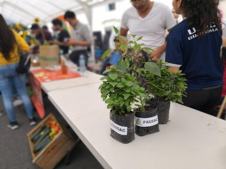 Algunos estudiantes regalaron plantas y árboles. (Foto: José Miguel Castañeda/Soy502)