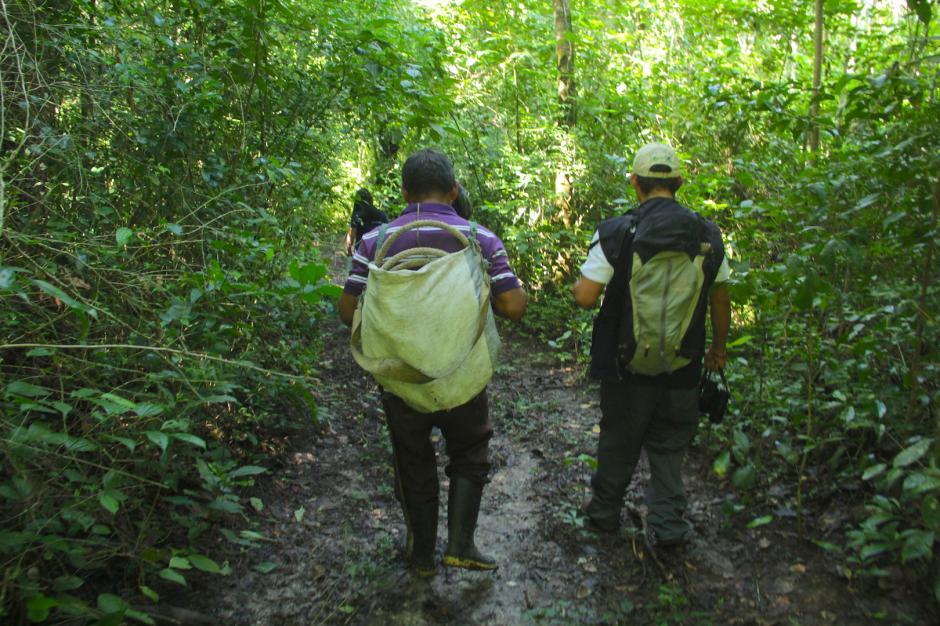 Los comunitarios buscan retomar la extracción de chicle como fuente de trabajo. (Foto: Fredy Hernández/Soy502)