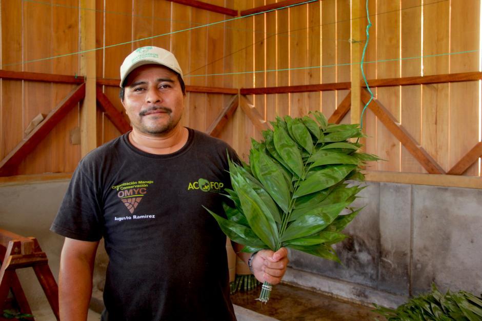 El xate es la principal actividad económica de la comunidad que se exporta a Estados Unidos. (Foto: Fredy Hernández/Soy502)