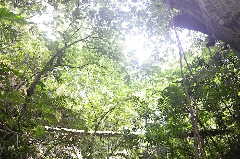 Los vecinos apuestan por la importancia de conservar los pequeños bosques urbanos. (Selene Mejía/Soy502)