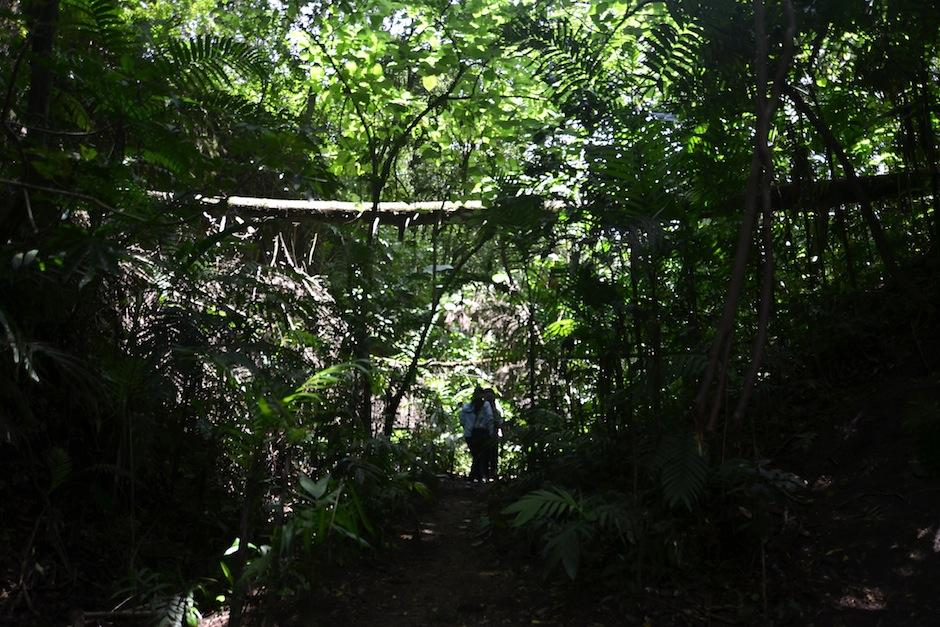 La Jungla Urbana es un barranco portegido por los vecinos de zona 15. (Selene Mejía/Soy502)