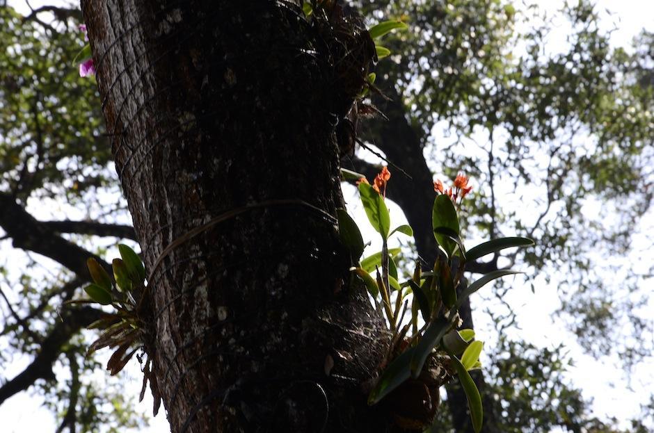 El parque ecológico La Asunción es santuario de Orquídeas. (Foto: Selene Mejía/Soy502)