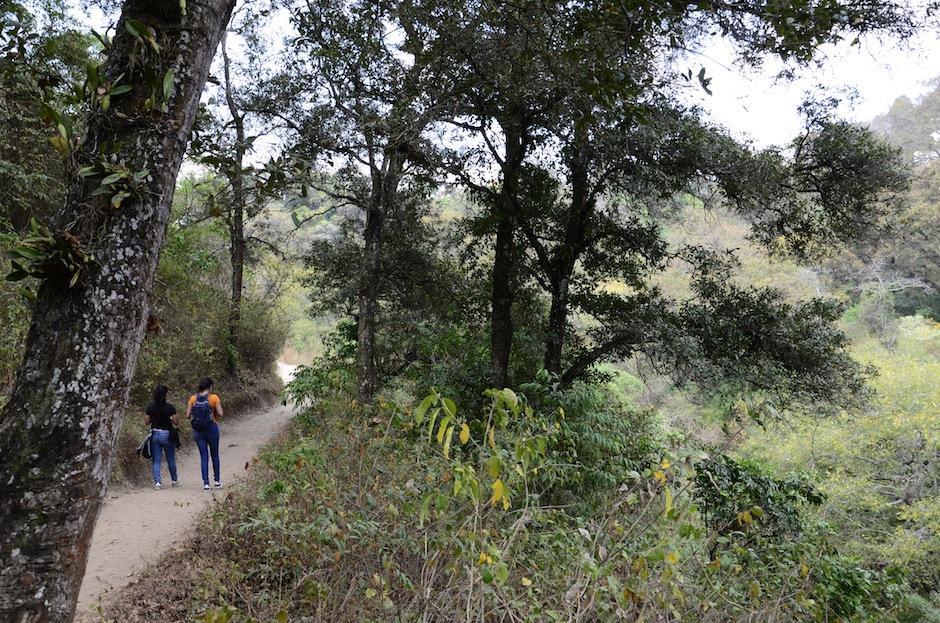 También puedes recorrer sus senderos. (Foto: Selene Mejía/Soy502)