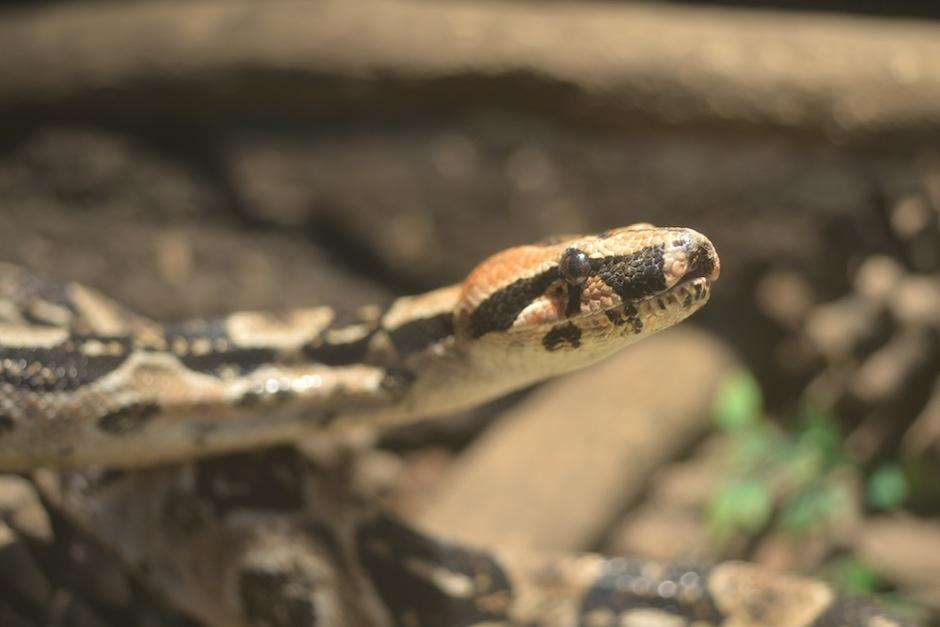 Naciones Unidas cuenta con un serpentario. (Foto: Jesús Alfonso/Soy502)