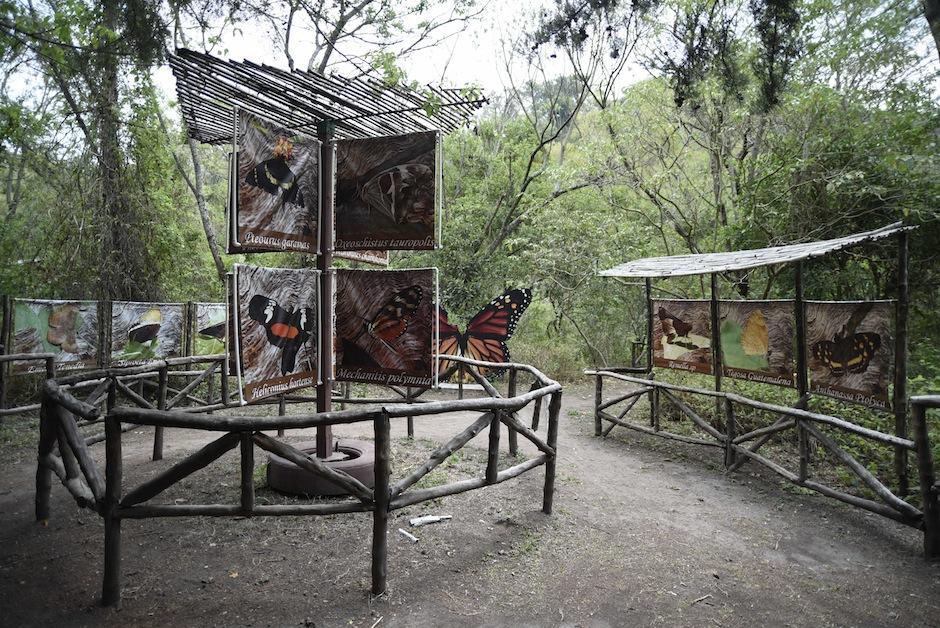 Aquí puedes identificar a las mariposas que veas en los senderos.  (Foto: Wilder López/Soy502)