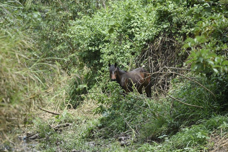Puedes disfrutar de la naturaleza montando a caballo o haciendo actividades deportivas en el Parque Cayalá.  (Foto: Wilder López/Soy502)