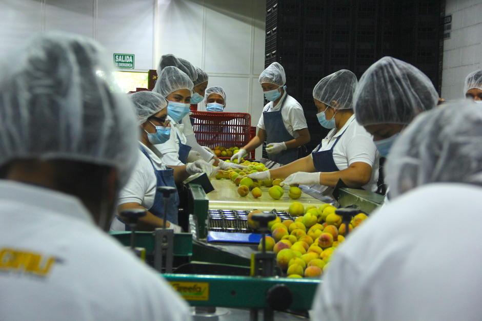 Las frutas son sometidas a diversos filtros hasta llegar a la caja para ser enviada a los distintos puntos de venta. (Foto: Fredy Hernández/Soy502)