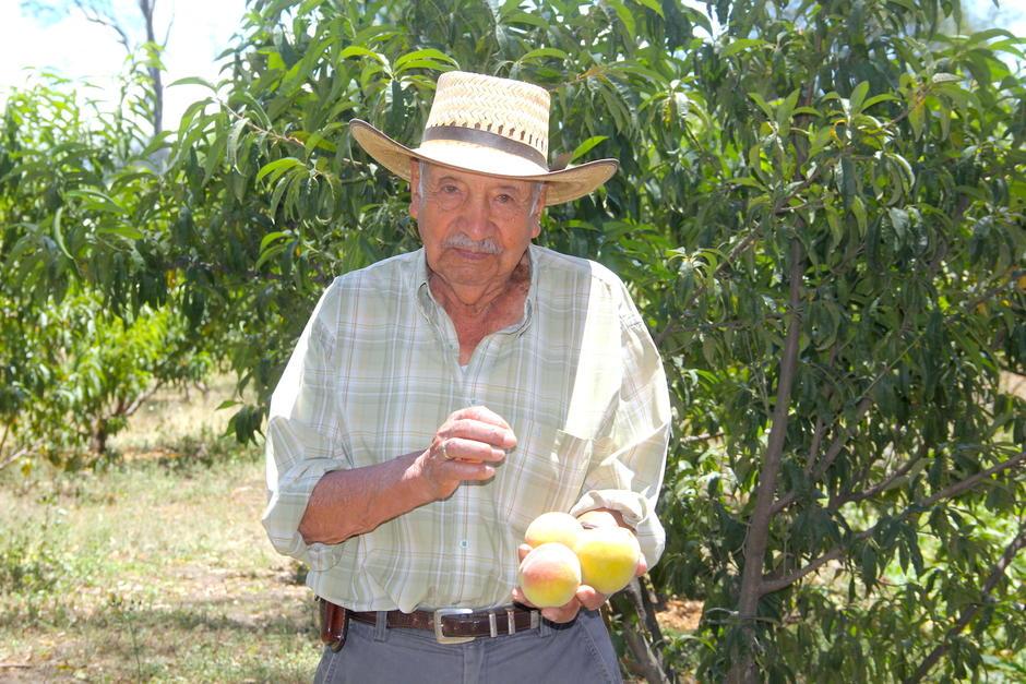 Oscar Ovalle es el pionero del melocotón Salcajá. A él se debe el éxito de este producto en ese municipio.  (Foto: Fredy Hernández/Soy502)