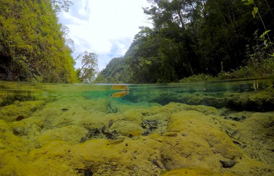 El agua es cristalina y puedes observar la fauna marina sin mayor esfuerzo. (Foto: Fredy Hernández/Soy502)