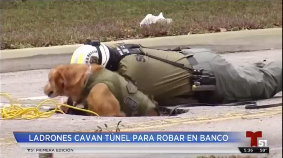 Ladrones cavaron un túnel para robar un banco