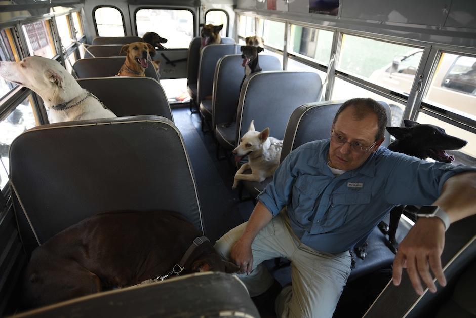 Pepe se asegura de que los perros vayan cómodos. (Foto: Wilder López/Soy502)
