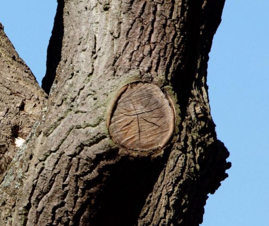 Desafío viral: ¿Podes ver al búho en el árbol?