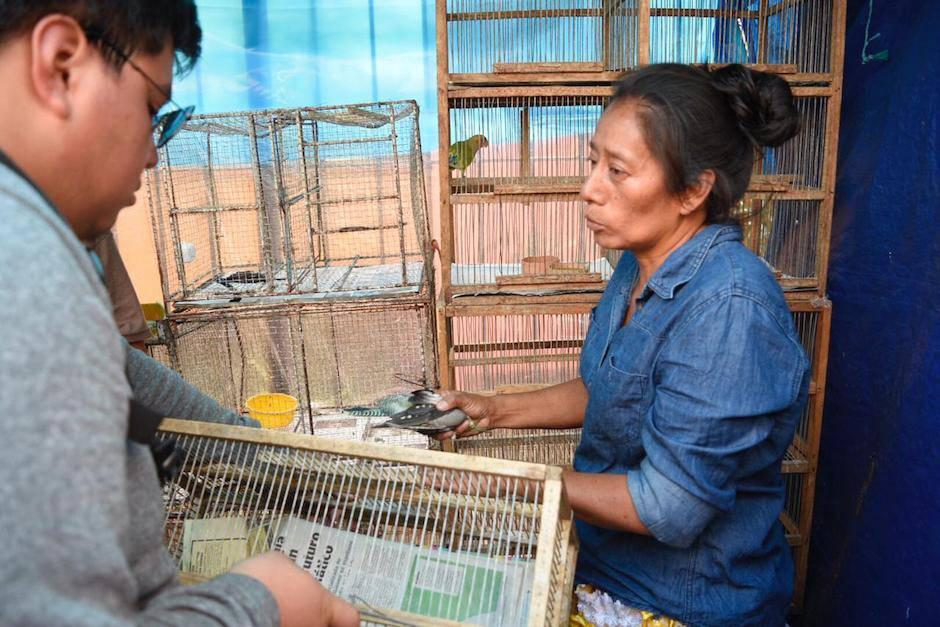El Ministerio Público (MP) empezó una investigación debido a que se considera como tráfico ilegal de fauna silvestre (Foto: Cortesía)