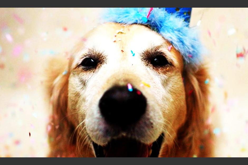 ¿Por qué se celebra el día Mundial del Perro?