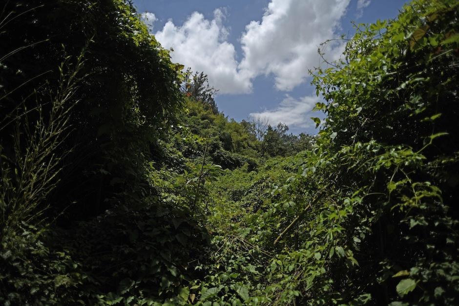 Aquí vive variedad de especies de flora y fauna. (Foto: Wilder López/Soy502)
