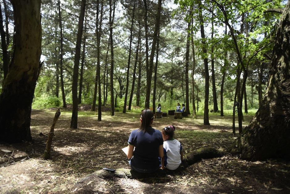 Este lugar son 10 hectáreas de bosque de pino y encino. (Foto: Wilder López/Soy502)