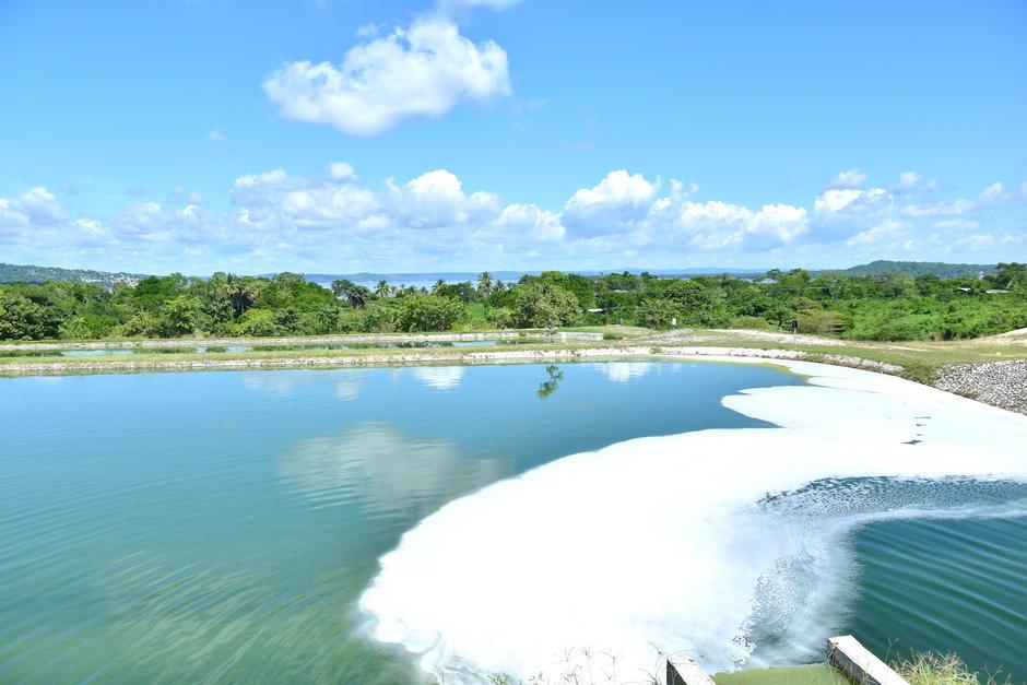 El sitio cuenta con 12 lagunas y cada una cumple un proceso hasta liberarla con la menor cantidad de contaminantes. (Foto: Fredy Hernández/Soy502)