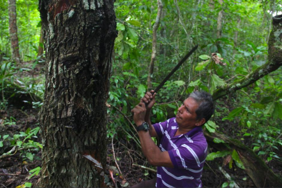 Las concesiones forestales han sido un modelo que ha servido para conservar los recursos del bosque en Petén, además de protegerlos de invasores u otras actividades ilícitas. (Foto: Fredy Hernández/Soy502)