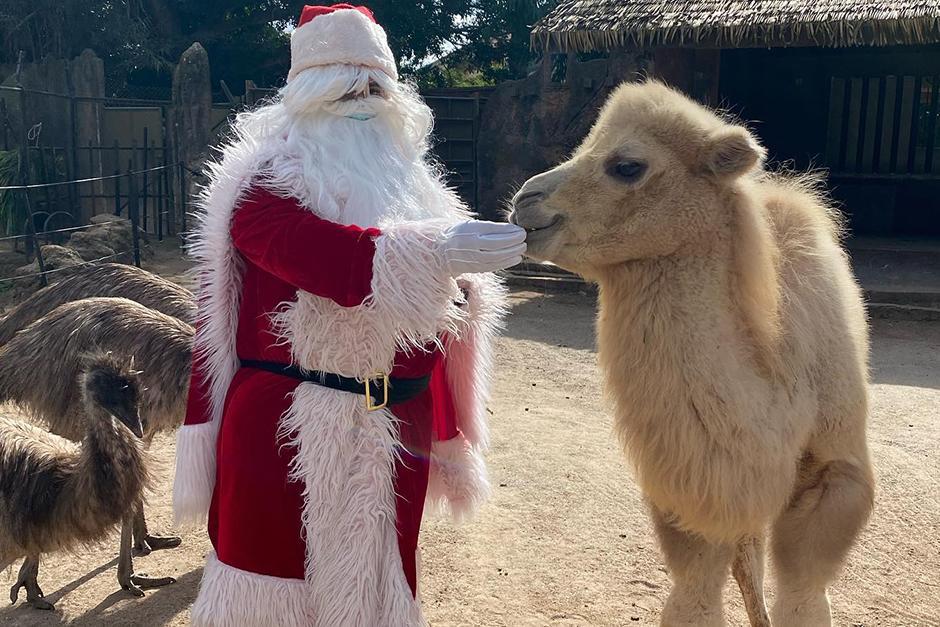 La visita de Santa Claus es una tradición en el Zoológico (Fotografía: Zoológico La Aurora)