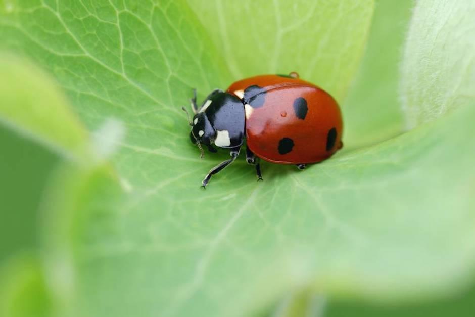 La desaparición de insectos implicaría consecuencias catastróficas (Foto: El País)