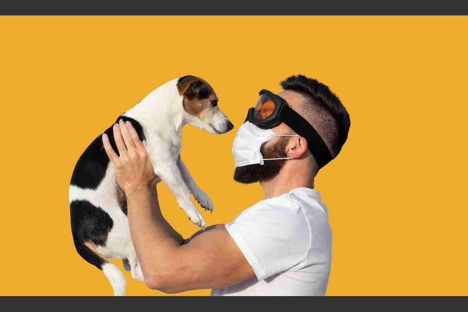 El COVID-19 no afecta a perros. (Foto OK Diario)