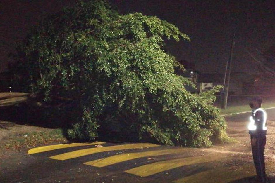 Las autoridades reportaron un árbol caído en residenciales Catalina, Villa Nueva. (Foto: Conred)