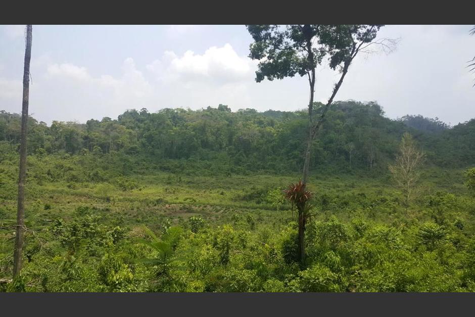 La Reserva Forestal de Vaca se localiza al sur de Benque Viejo y el Arenal, en Belice. (Foto: Booking)