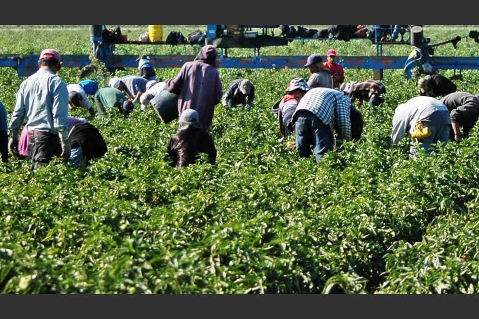 El 22 de julio Guatemala y EE.UU. firmaron un acuerdo para ofrecer visas temporales a trabajadores agrícolas. (Foto: Archivo/Soy502)