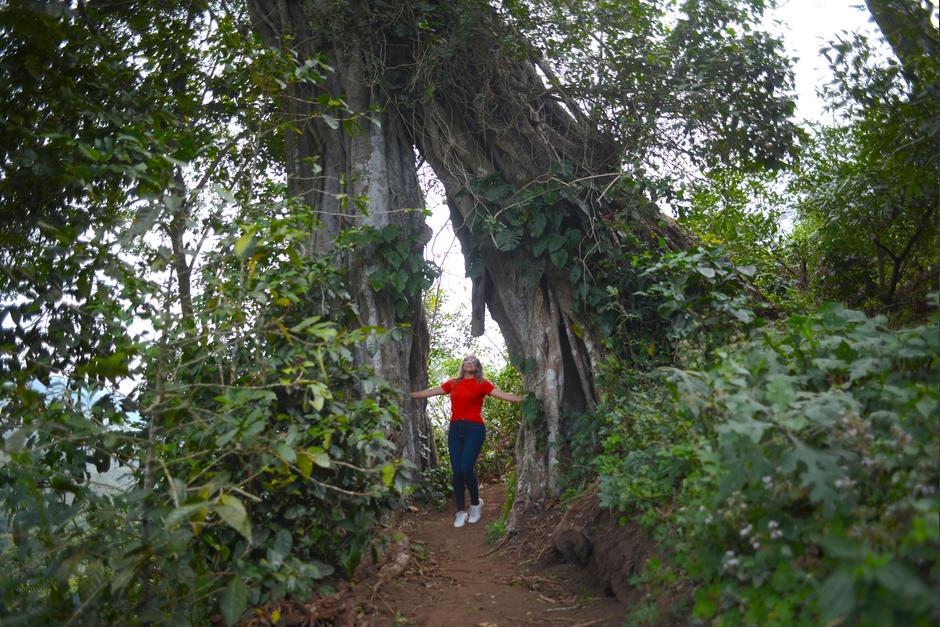 El Amatón es un árbol emblemático del parque. (Foto: Wilder López/Soy502)