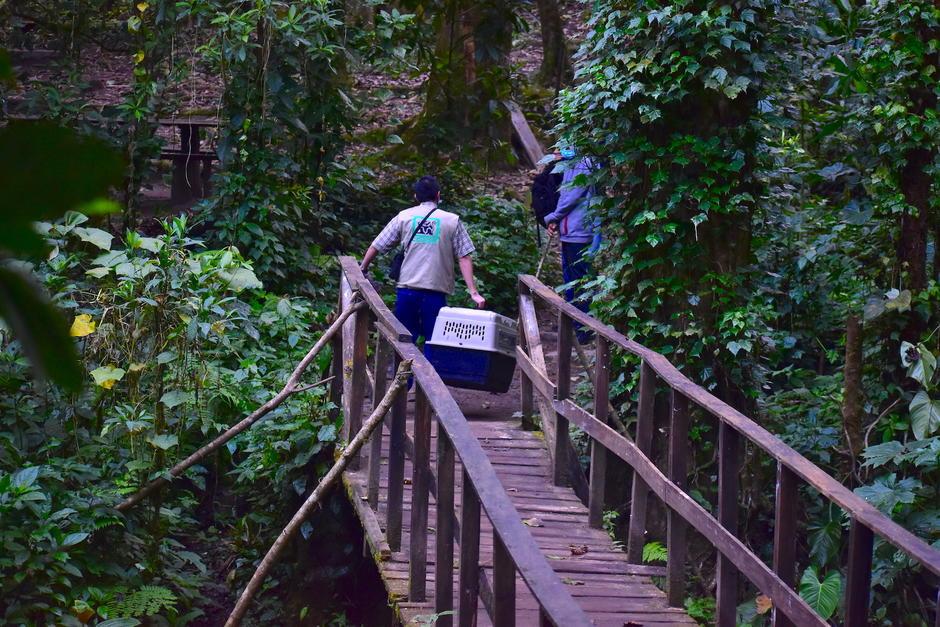 El objetivo inicial del parque era la captación de agua, pero pronto se convirtió en un santuario para el quetzal. (Foto: Fredy Hernández/Soy502)