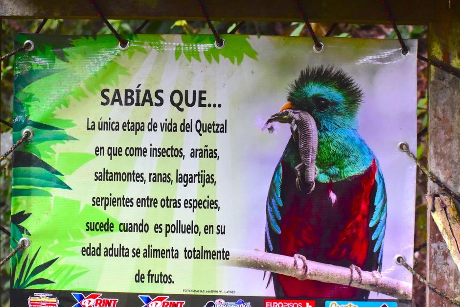 En este sitio se determinó que los polluelos de quetzal se alimentan de reptiles en su etapa de crecimiento. (Foto: Fredy Hernández/Soy502)