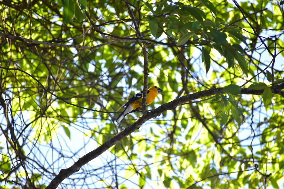 El lugar también sirve de hogar para otras aves que se pueden divisar en el área. (Foto: Fredy Hernández/Soy502)